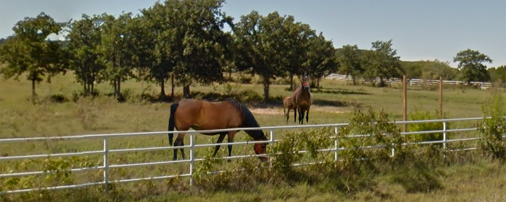 Insurance for Ranchers in Texas by Quote Texas