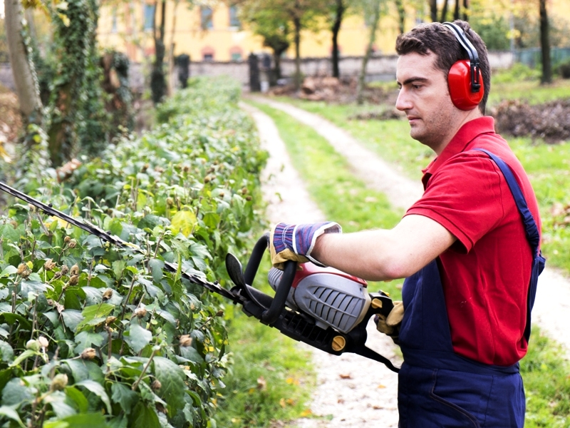 A man pruning bushes with a petrol hedge trimmer.